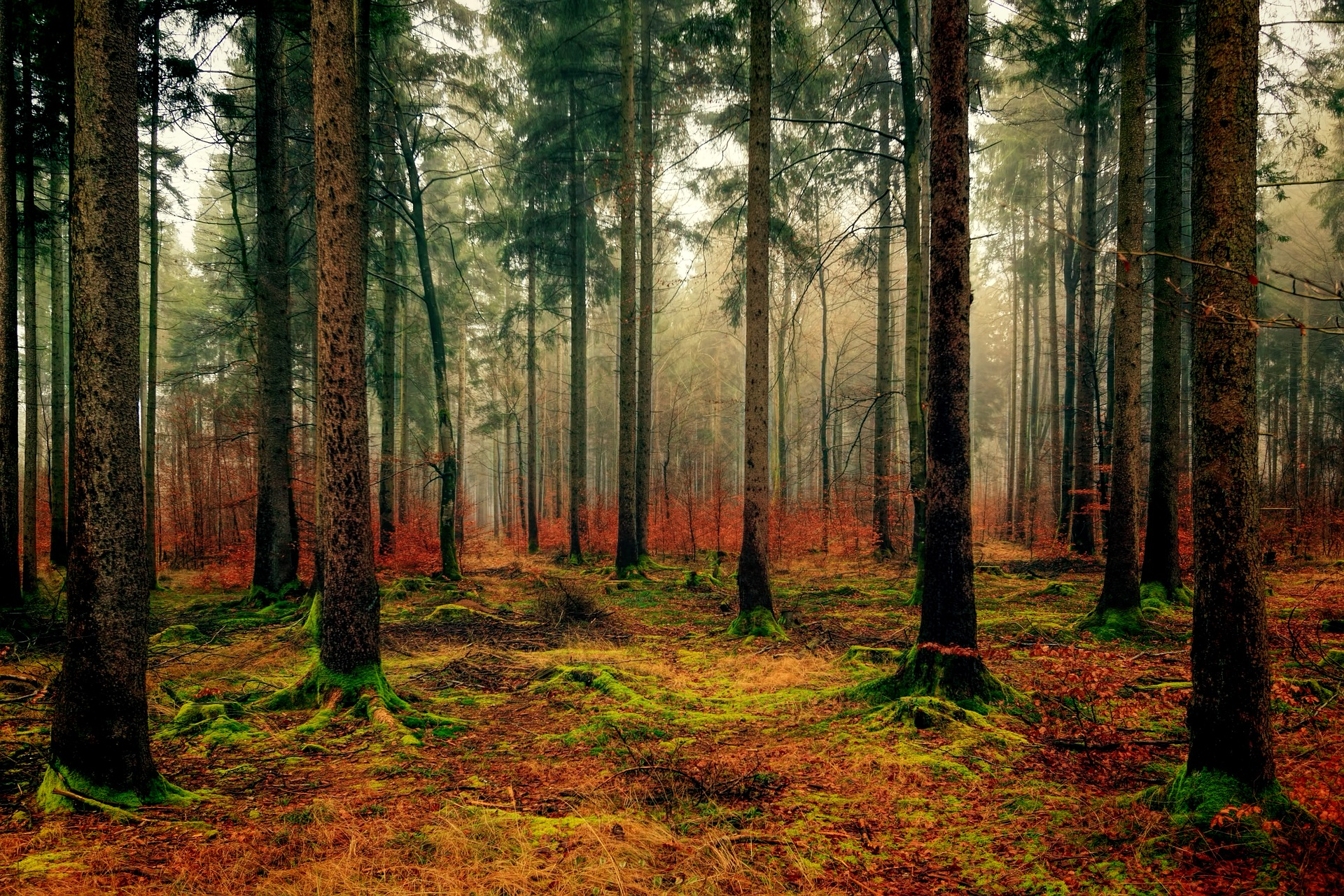 See the wood and not the trees: tax-free forestry investment